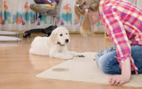 Carpet Cleaning Services HILLARYS